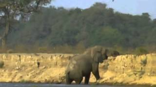BBC Natural World 1998  Vanishing Pools of the Zambezi