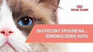(1.70 MB) Skuteczny sposób na... obcinanie pazurów kota  || ROYAL CANIN ||  Porady właściciela dla kota Mp3
