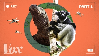How the BBC makes Planet Earth look like a Hollywood movie by : Vox