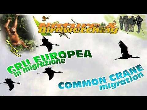 Common Crane migration 2009