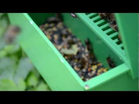 Пыльцеуловители своими руками