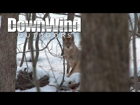 Coyote Hunting: Make It Quick (DownWind Outdoors)