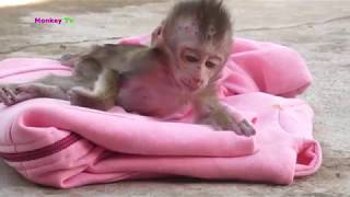 KAYA baby monkey trying to walks but her both legs sick she is going to see vet