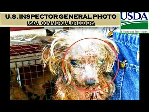 U.S.INSPECTOR GENERAL Gives Itself *FAIL*- PET STORE PUPPY BREEDERS- FEDERAL CRIMINAL CRUELTY!