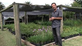 Jardin urbano - Plantas duraderas con floración interesante - Herbaceas Perennes