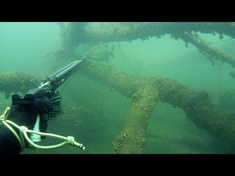 Leszcz 2 Kg / Spearfishing Bream 4 Lb