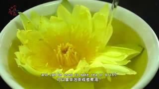 《哈 臺南》第八集:荷蓮之鄉│《Hot Tainan》EP8.Home of the Lotus