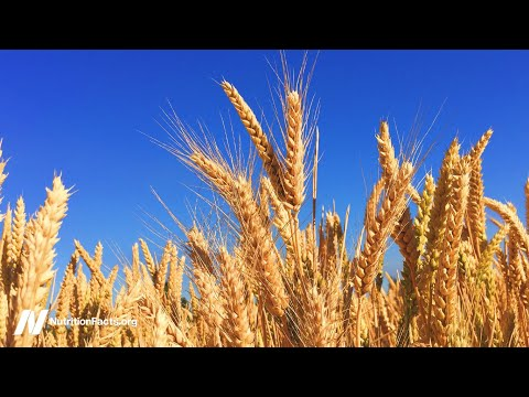 Gluten-Free Diets - Separating the Wheat from the Chat