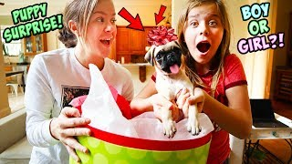 AYDAH GETS A SUPER SPECIAL PUPPY SURPRISE FOR CHRISTMAS!!