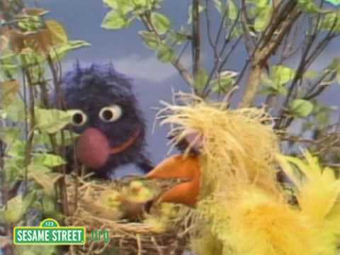 Sesame Street: Grover Finds A Bird's Nest Video