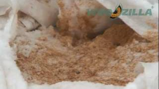 Fresh poplar & aspen sawdust Ukraine | Wood shaving for poultry bedding