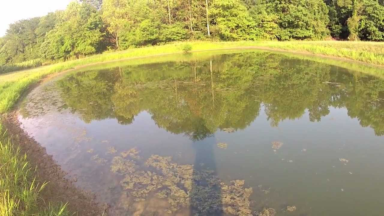 Pond bass fishing youtube Best lures for pond fishing