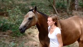 2 jarig paard in vrijheid (De Hoge Veluwe)