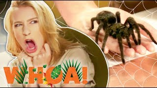 TARANTULAS CRAWL ON OUR FACE?! (Whoa! Nature Show)