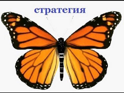 Бабочка гартли для бинарных опционов