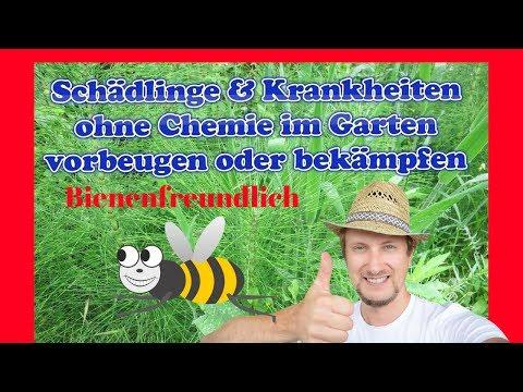 Schädlinge & Krankheiten bei Gartenpflanzen bekämpfen & vorbeugen