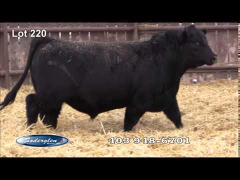 Soderglen Select 2015 lot 220 Black Angus
