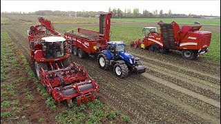 Grimme Sugar-Beet Harvesting Demo | Rextor / Maxtron / Rootser / RUW 4000