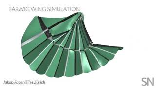 Earwig wings inspired a new origami gripper | Science News
