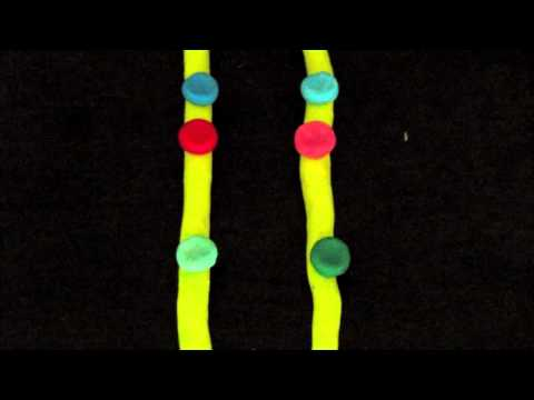 Gene Linkage, Crossing Over, & Mapping