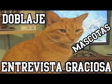 Entrevista Graciosa | Mascotas