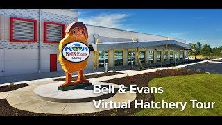Take The Bell & Evans Chicken Hatchery Tour