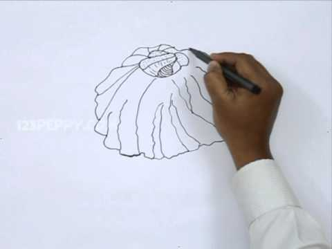 Acorn Barnacle Drawing How to Draw Barnacles