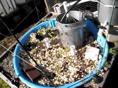 Home Aquaculture Project, 2013 - Part 1