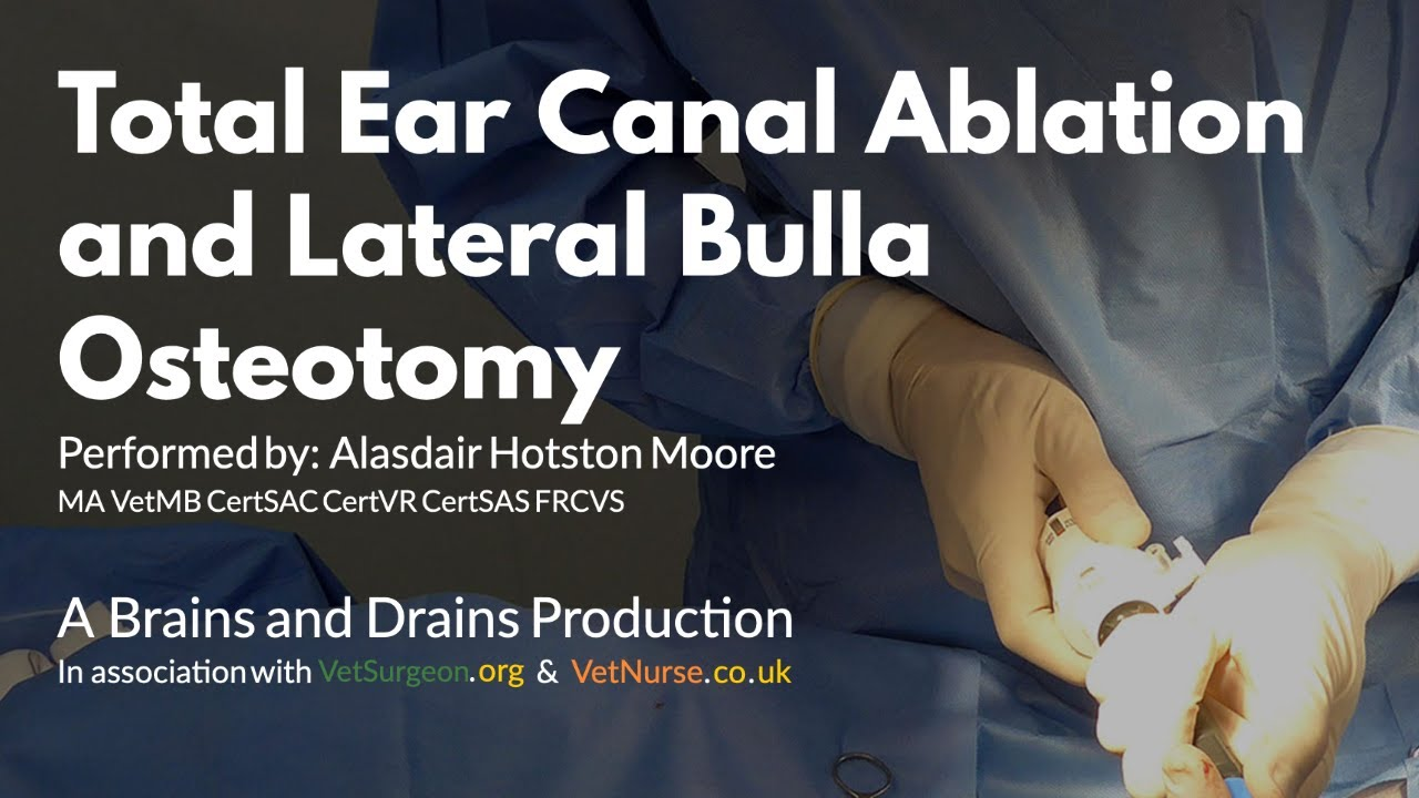 Total Ear Canal Ablation Cost Cat