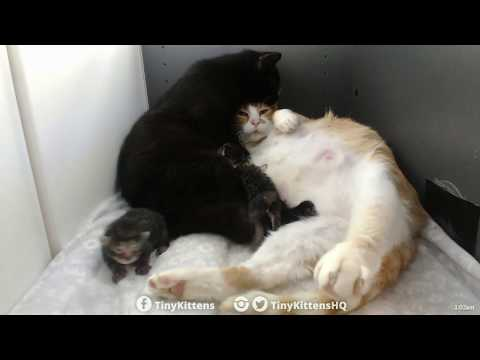This is the best/weirdest cat video you'll ever watch!  TinyKittens.com