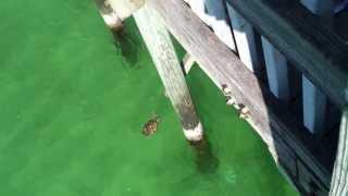 Russell fields pier panama city beach fl for Panama city beach fishing pier