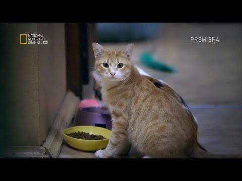 Эрмитажные коты!