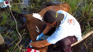 FOUR PAWS vet team rescued an injured mare just in time