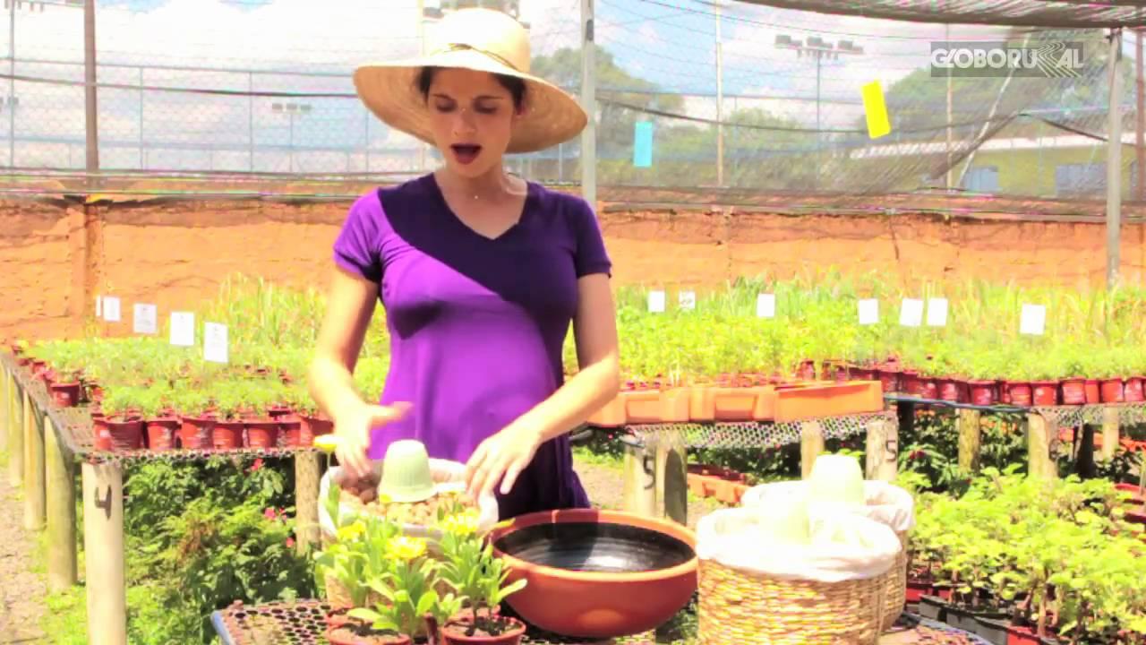 Flores comest veis como cultivar youtube for Como sembrar plantas ornamentales