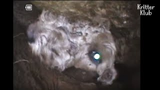 Dog Gets Stuck Inside A Giant Rock | Animal In Crisis EP43
