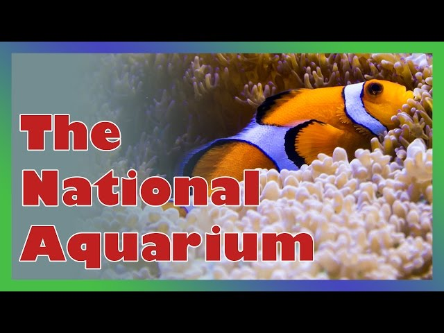 National Aquarium in Baltimore, MD in HD