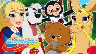 10 ช่วงชีวิตสัตว์ | DC Super Hero Girls ไทย