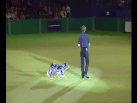 Canine freestyle training display Part 1 with Richard Curtis at Crufts 2009