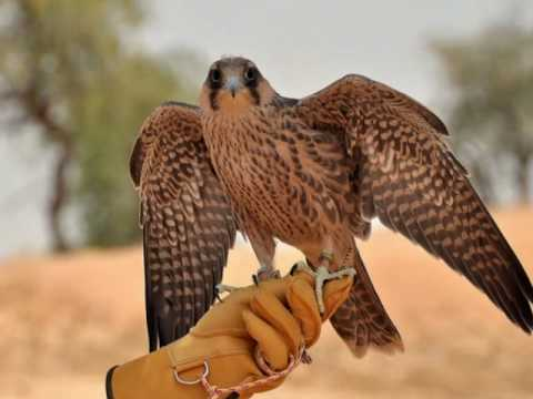 Banyan Tree Al Wadi - Ras Al Khaimah - The luxury Desert Resort - Documentary