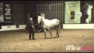 Preview of Richard Maxwell's Loading Demo | Your Horse Live 2012