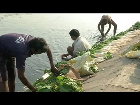 Vegetables grown along Yamuna river bed containing high level of cancer causing metals