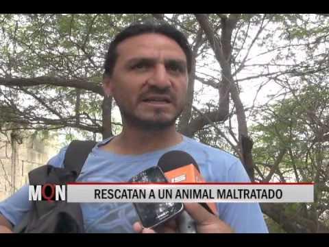 17/12/14 12:43 RESCATAN A UN ANIMAL MALTRATADO