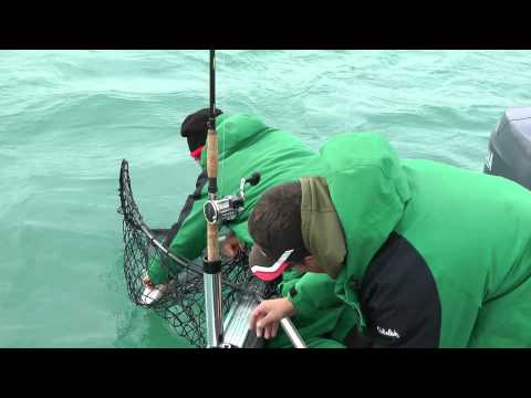 Fish with teeth tour 2011 Trolling for Walleye on Erie and Jigging for Muskie on the Detroit River