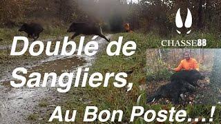 Doublé de Sangliers au Bon Poste! Chasse en Battue avec la Blaser R8