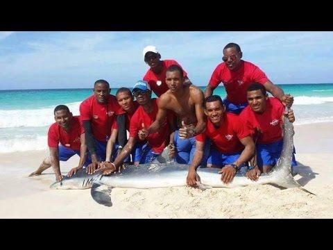 Arrastran a un tiburón a la playa para tomarse fotos con él y lo matan!!!
