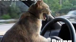 FUNNY CAT PICS EPISODE 1!!!