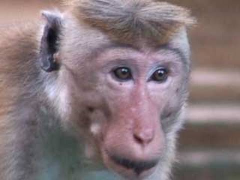 Funny Monkey For Kids video