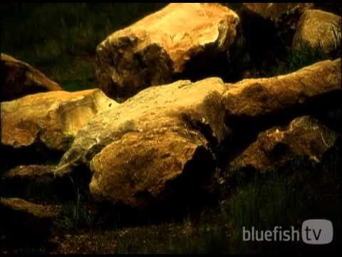The Elements of Easter | Bluefish.tv