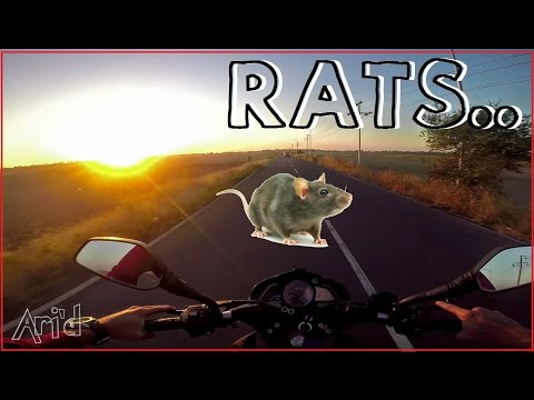 Rats vs. Pulsar 200NS