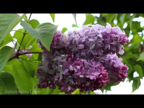 Шопен Фредерик - Вальсы для фортепиано